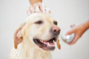 dog hydrobathing