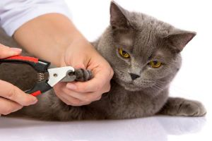 cat free nail clipping