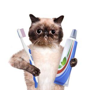 brush your cat's teeth