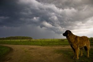 dogs in thunder storms