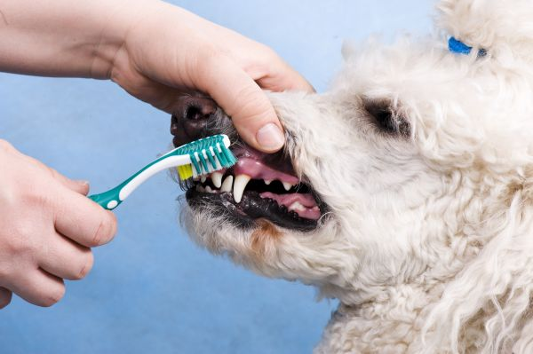 Can U Use Toothpaste On Dogs