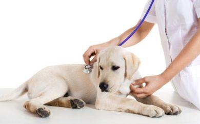 daisy hill vet dog and vet
