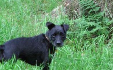 daisy hill vet dog exercising 2