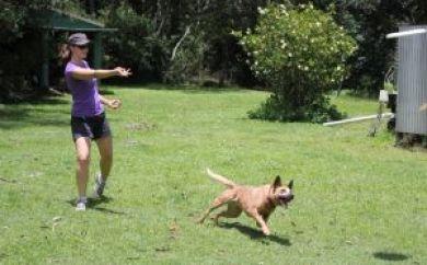 daisy hill vet dog with frisbee