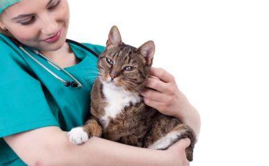 daisy hill vet nurse