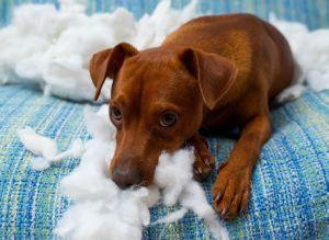 pet pet behaviour consultations