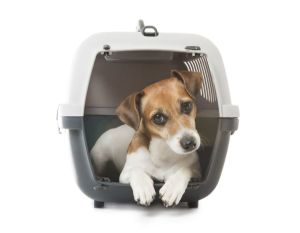 dog travelling in carrier