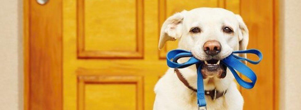 Daisy Hil dog behaviour