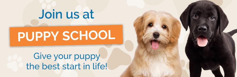 logan puppy preschool