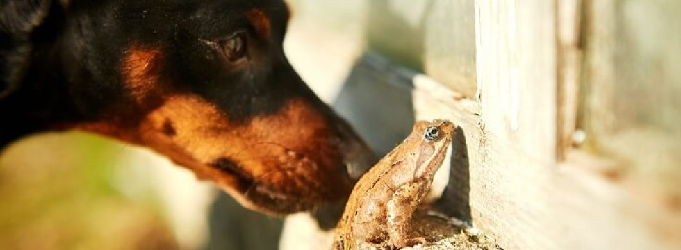 dog and cane toad