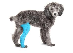 knee cap surgery
