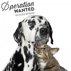 Operation wanted cat dog